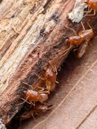 Termite Control Methods Fundamentals Explained