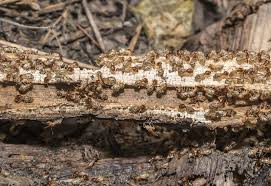 6 Easy Facts About Termite Control Near Me Explained