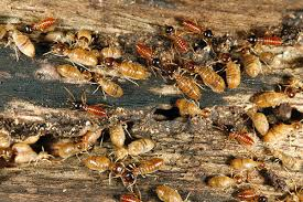 Examine This Report about Termite Control Methods At Home