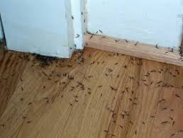 Examine This Report about Termite Control Home Remedy