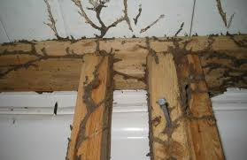 Unknown Facts About Termite Control No Tent