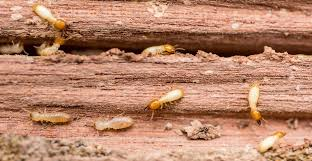 The Main Principles Of Termite Control Yelp