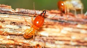 The Only Guide to Termite Control Tech