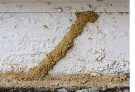 Unknown Facts About Termite Control Kits