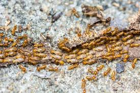 The Ultimate Guide To Termite Control Procedure