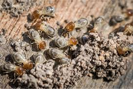 Termite Control Using Salt Things To Know Before You Get This