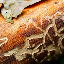 The Best Strategy To Use For Termite Control Using Neem Tree