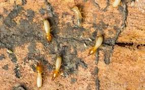 The Termite Control On Walls PDFs
