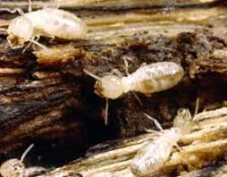 Excitement About Termite Control Methods