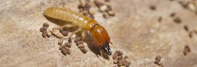Unknown Facts About Termite Control Types