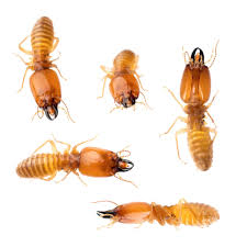 Termite Control New Construction - The Facts