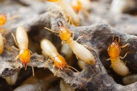 Unknown Facts About Termite Control Review