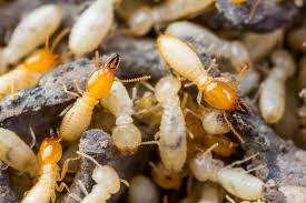 Termite Control Methods - Questions