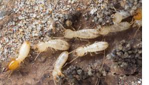 Things about What Cost For Termite Control