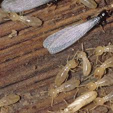 Termite Control Electronic for Dummies
