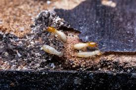 Facts About Termite Control Types Revealed