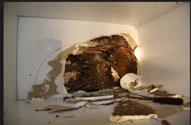 Get This Report on Global Termite & Pest Control Adelaide