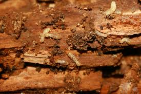 Some Known Factual Statements About Termite Control New Construction