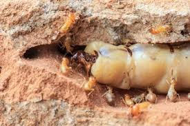 The Express Termite & Pest Control Adelaide Diaries