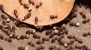 Get This Report on Termite Pest Control Near Me
