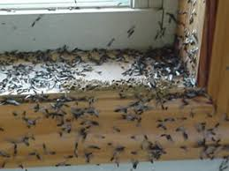 Some Known Questions About Termite Control Without Chemicals.