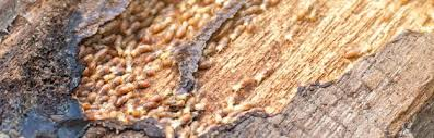 Facts About Termite Control Effectiveness Uncovered
