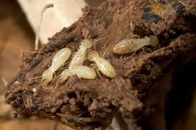 Some Known Details About Termite Control Review