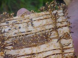 7 Easy Facts About Termite Control Methods At Home Shown
