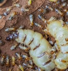 What Does Termite Control Specialists Mean?