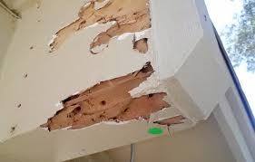 Termite Control On Walls - An Overview