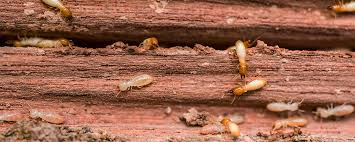 Termite Control Specialists - The Facts